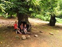 kinderen in de boom