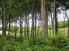 Tussen de bomen het gras zien.