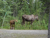 Begint al goed: eland met jong op camping