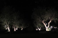 Verlichte bomen op het park