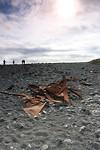 Wrak van de Epine GY7 op het strand van Djúpalónssandur