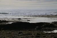 zeehonden op het strand bij Ytri Tunga