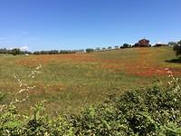 Bloemenvelden rond Tuscania