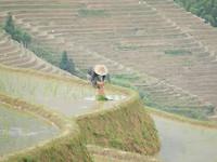 Een boer op de rijstvelden