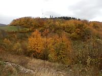 Onderweg herfst kleuren