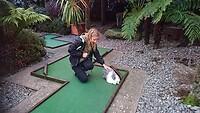 Rabbit Mini Golf