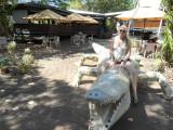 Krokodillen cruise Adelaide river