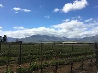 Kaapstad, Stellenbosch