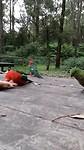 Moaie fûgels op it kampeerplak dy spontaan by ús kamen te sitten
