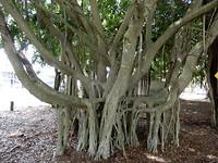 Zo maar een boom