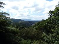 het tropische regenwoud