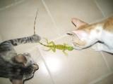 Saico, Leo & Mr. Iguana