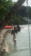 Onderweg olifanten