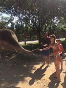 Olifant voeren