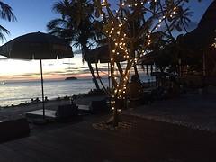 Horizon lampjes boom