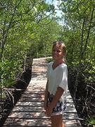 Mangrove joli