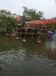 bamboe brug
