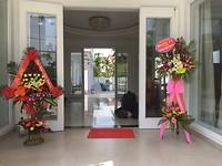 Palmy villa opening