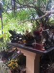 Cat ba tempel 2