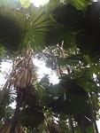 palm dak