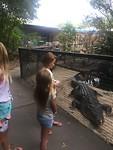 Grote krokodil