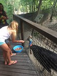 Joli voert cassowary