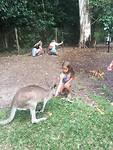 Jessa kangoeroe