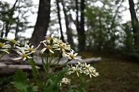 Blüemli im Feuerland Nationalpark