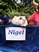 Gisteren was er een opgezette Nigel, vandaag de echte
