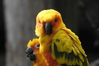 38. Tropische vogel