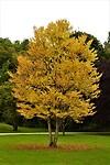 31. Mijn favoriete jaargetijde...herfst (in het Luitpoldpark)