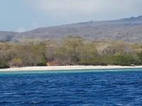 Snorkelen bij Menjangan island