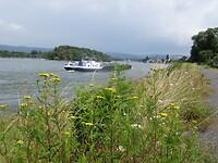 De Rijn is indrukwekkender en robuuster met zijn sterke stroming en drukke scheepvaart