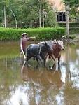 Beeld vanhet dorpse leven voor de ramp