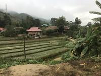 Rijstvelden op weg naar Yen Bai