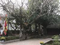 Hoa Lu tempels