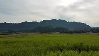 wandelen op platteland in de jungle