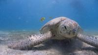 The Turtle (met dank aan Johan)