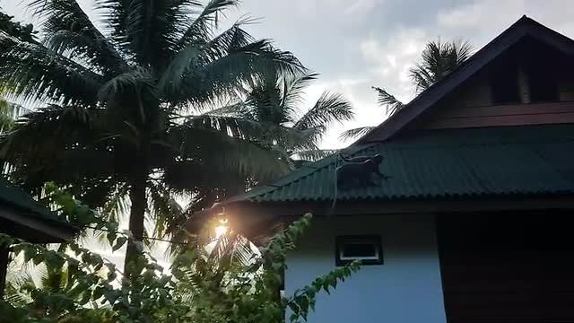 Apen op de daken van de buren bij Cocohut Chalet