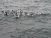 Flipper en zijn vriendjes
