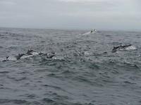Nog meer dolfijnen
