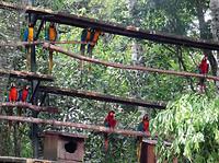 In de grote papegaaien-kooi