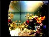 Mijn zeeaquarium