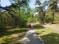 In de bossen bij Oosterhout
