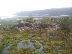 Moerassig veen-achtig bovenop een heuvel