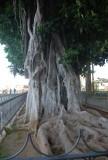het hele stadje staat vol met prachtige bomen