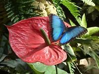 vlindertuin Benalmádena
