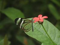 de vlindertuin in Benalmádena