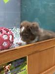Hondjes in de dierenwinkel wachtend op een nieuw baasje