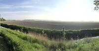 Ochtendzon in de polder